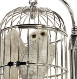 Hedwig in kooi - filmspullen